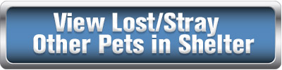 View Lost/Stray Other Pets in Shelter
