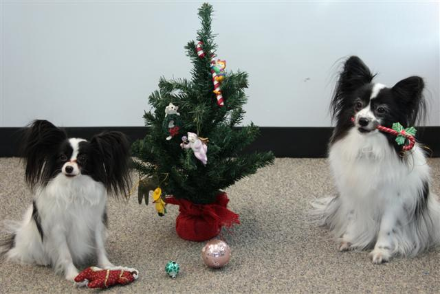 Christmas Tree Dogs (Small)