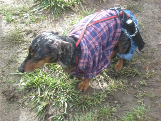 Costume Doxie (Small)