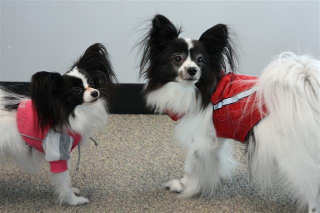 jacket dogs (Small)