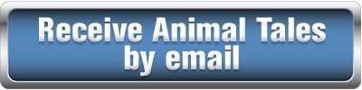 receive Animal Tales by email