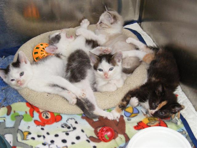 Bonnie L Hays >> Animal Shelter Full of Cats and Kittens, Permanent and Foster Homes Needed