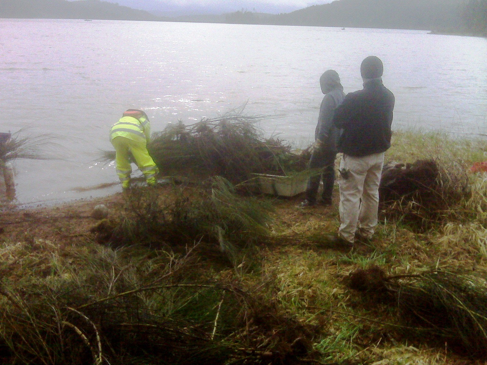 Community Service - Hagg Lake Scotch Broom Removal
