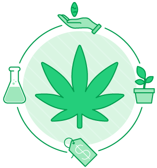 Marijuana graphic